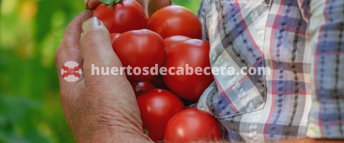 Castellón clanes huertosdecabecera.com