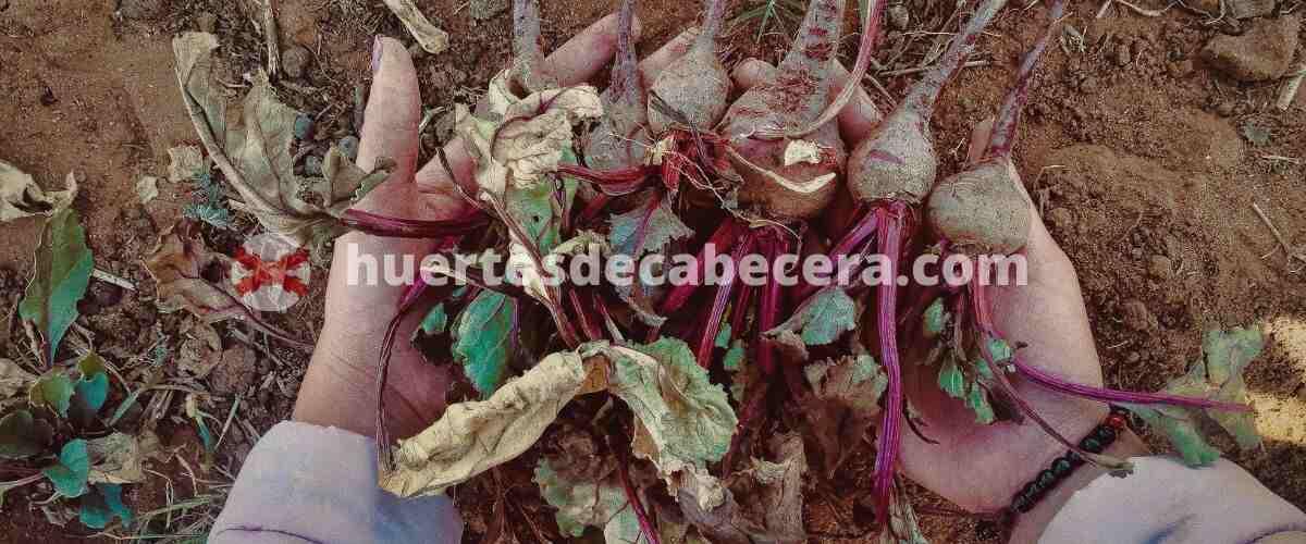 Ciudad Real clanes huertosdecabecera.com