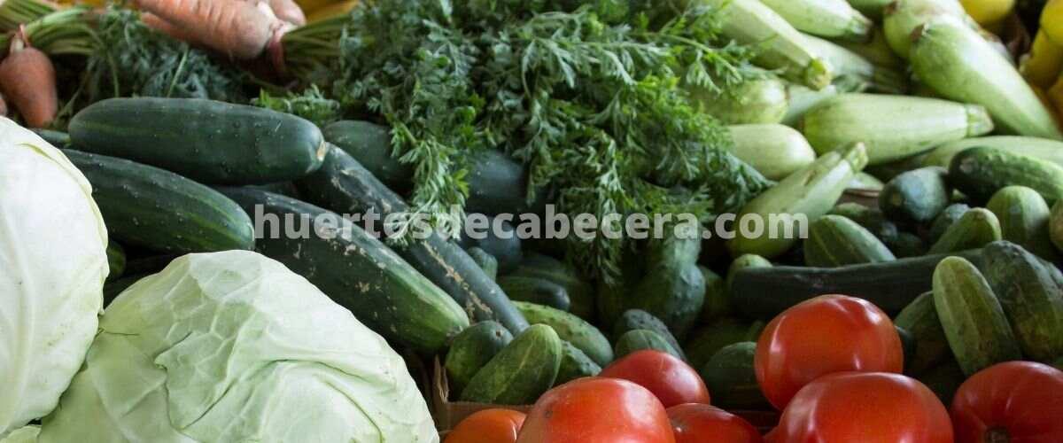 Gerona clanes huertosdecabecera.com